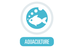 RASLine Application Optimised UV for Fish Farming