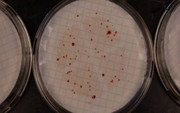 Is E coli losing its reliability as a Fecal Indicator Bacteria